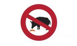 Afrikanische Schweinepest